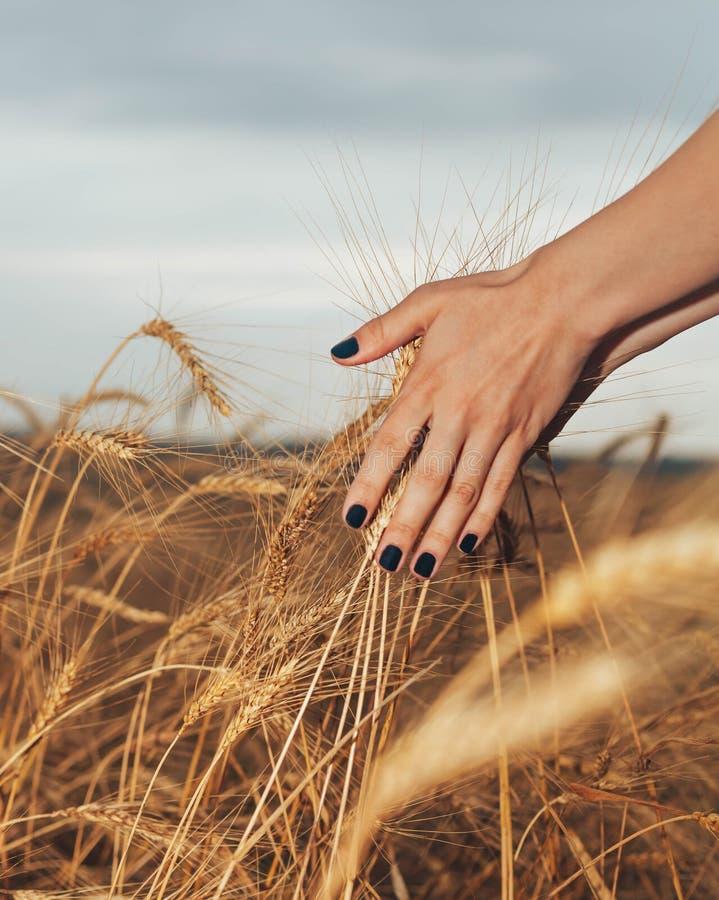 As mãos fotografia de stock