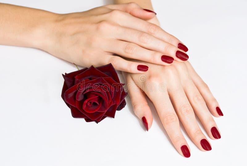 As mãos com manicure vermelho e levantaram-se imagens de stock royalty free