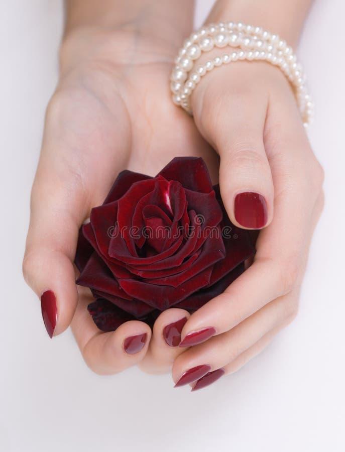 As mãos com o manicure que prende o vermelho levantaram-se fotografia de stock
