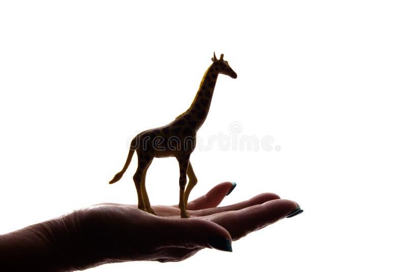 As mãos da mulher com figura animal posta em perigo rara - silhueta, animais de proteção fotos de stock royalty free