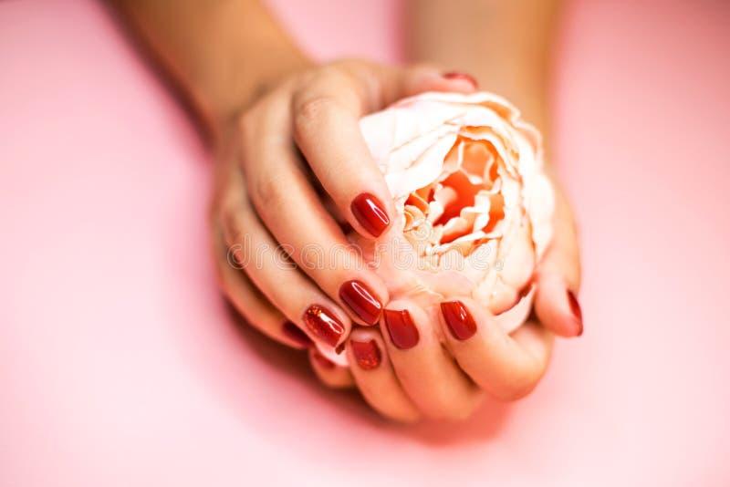 As mãos da mulher com a flor vermelha da terra arrendada do tratamento de mãos imagem de stock