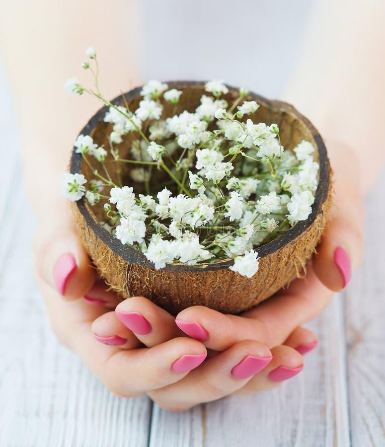 As mãos da mulher com o tratamento de mãos cor-de-rosa que guarda o coco descascam completamente das flores fotos de stock