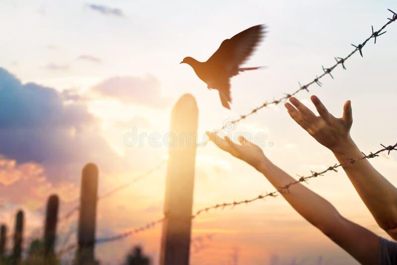 As mãos da mulher livram o pássaro acima de uma cerca de fio farpada fotos de stock royalty free