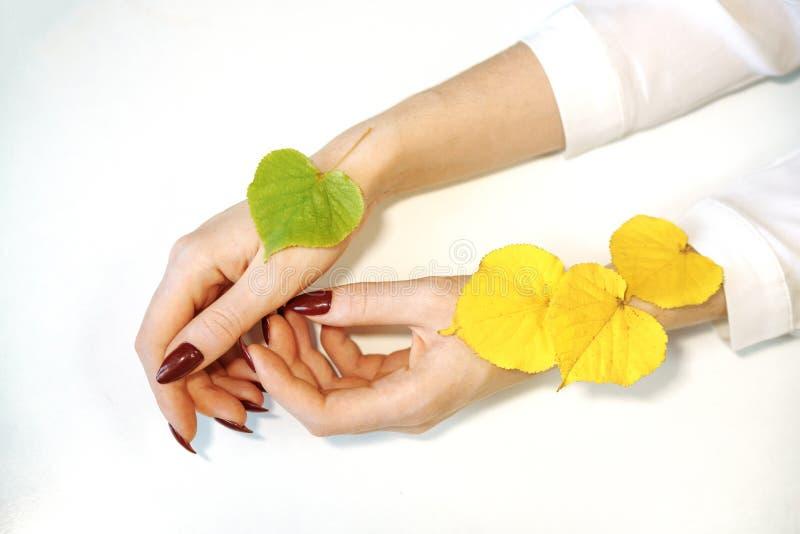 As mãos das mulheres no fundo branco ao lado das folhas amarelas da mentira entregam o conceito do cuidado imagens de stock