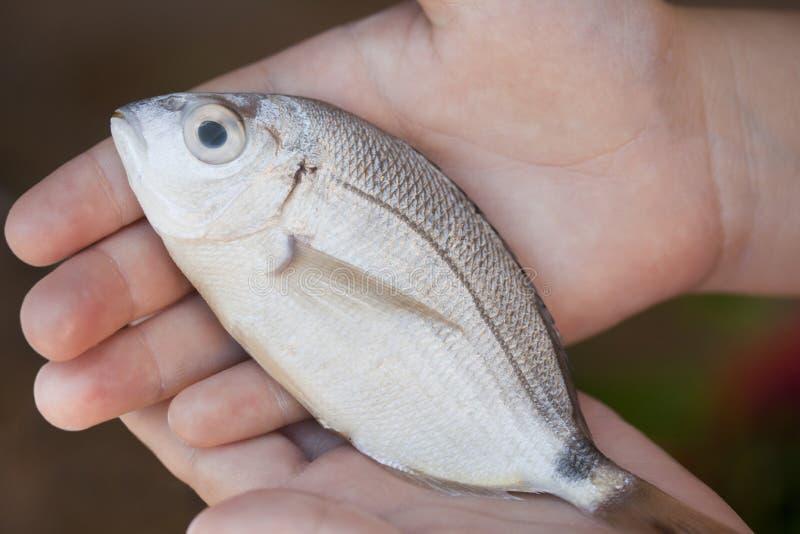 Download Peixes foto de stock. Imagem de fishery, holding, saudável - 29841880