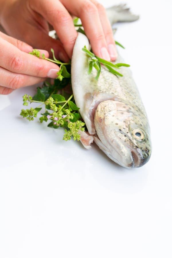 As mãos do cozinheiro chefe fêmea que enchem recentemente uma truta do cought fotos de stock royalty free