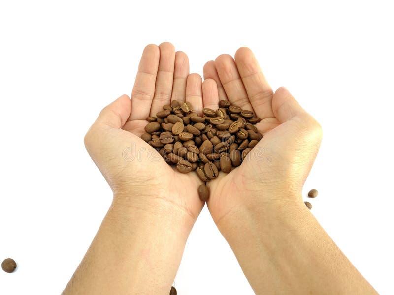 As mãos do homem asiático que mantêm feijões de café isolados no branco imagem de stock