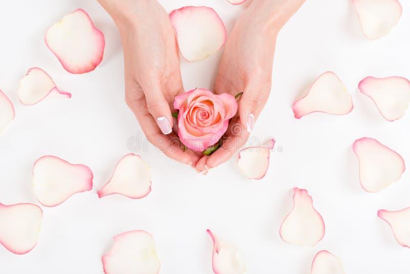 As mãos fêmeas com o tratamento de mãos bonito que guarda a rosa do rosa florescem foto de stock