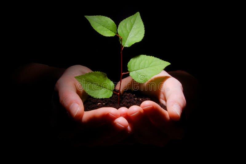 As mãos sujam e plantam mostrar o crescimento imagens de stock royalty free