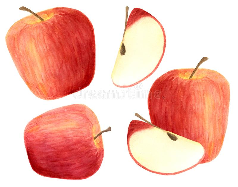 As maçãs da aquarela ajustaram-se isolado no fundo branco Frutos vermelhos tirados mão, fatia para empacotar, projeto do menu ilustração do vetor