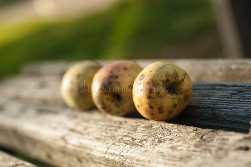 As maçãs maduras estão encontrando-se em um banco de madeira imagem de stock