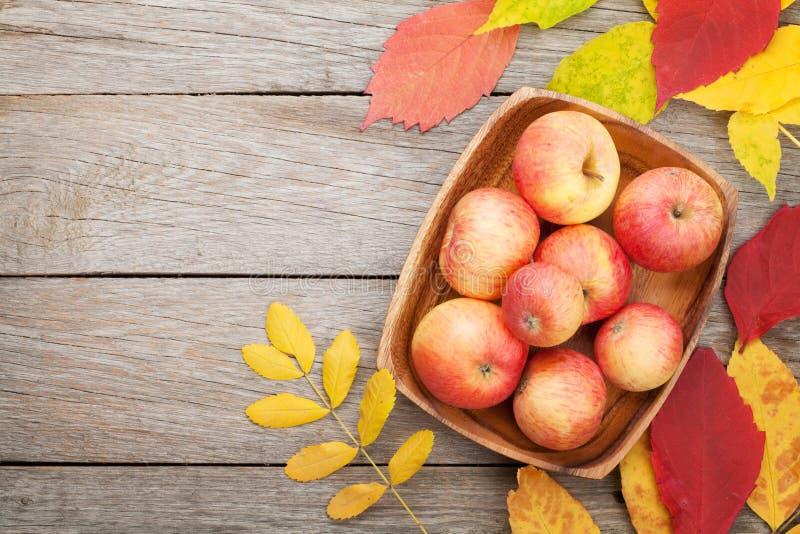 As maçãs na bacia e nas folhas de outono coloridas woden sobre o fundo foto de stock