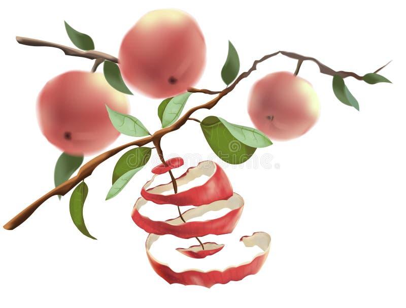 As maçãs vermelhas penduram nos ramos O conceito da colheita e de um estilo de vida saudável Corte a casca de Apple ilustração stock