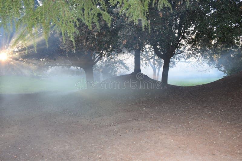 As madeiras na névoa fotos de stock