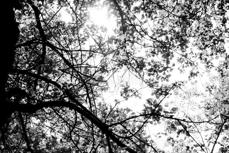 As maravilhas das árvores e das suas ramificação foto de stock royalty free