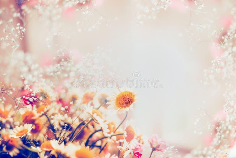 As margaridas românticas florescem no fundo claro, beira floral fotografia de stock