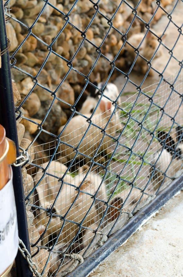 As massas sujaram o coelho em uma gaiola imagem de stock