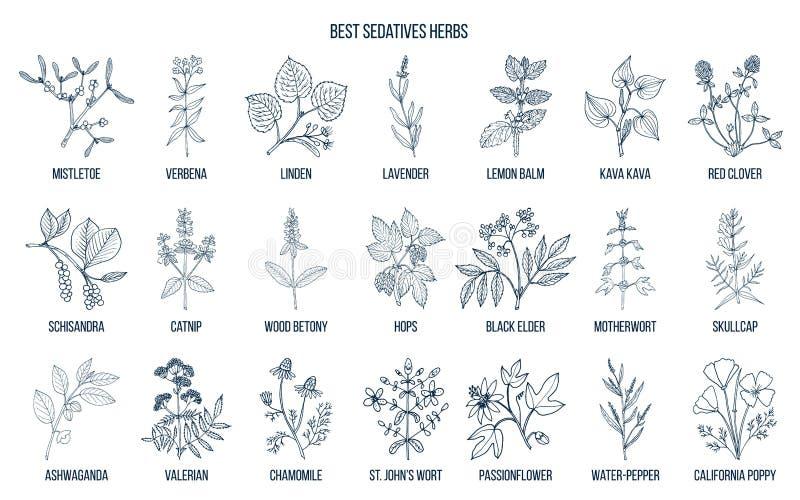 As melhores ervas dos sedativos ilustração stock