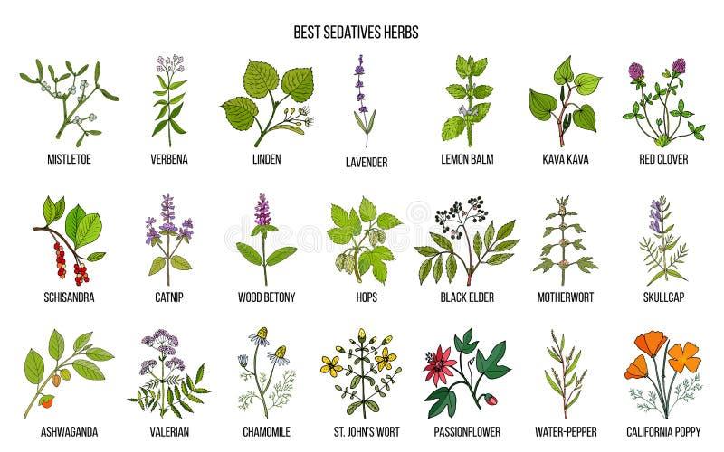 As melhores ervas dos sedativos ilustração do vetor