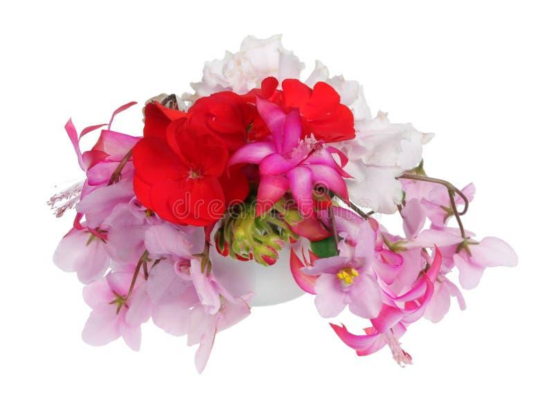 As melhores flores favoritas ideais das plantas internas saltam macro isolado mistura fotografia de stock royalty free