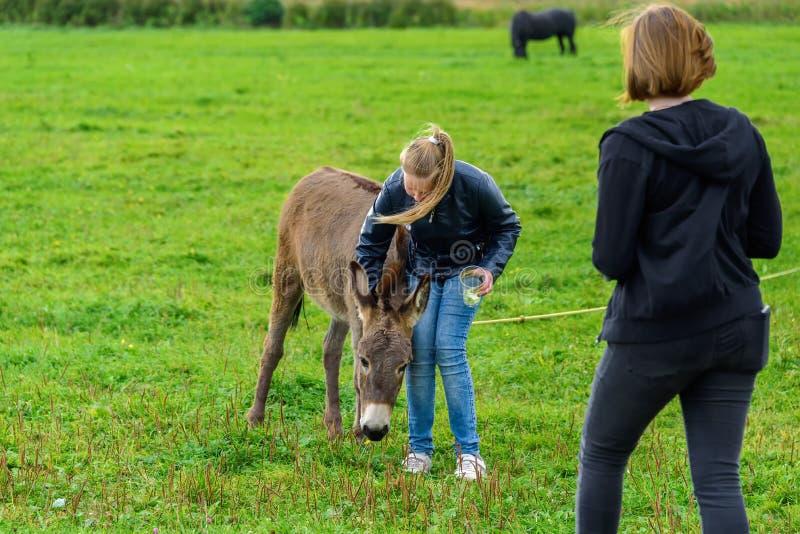As meninas alimentam o asno em um gramado verde foto de stock