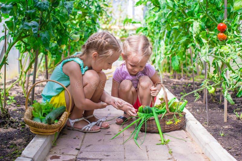 As meninas bonitos recolhem pepinos da colheita no fotos de stock royalty free