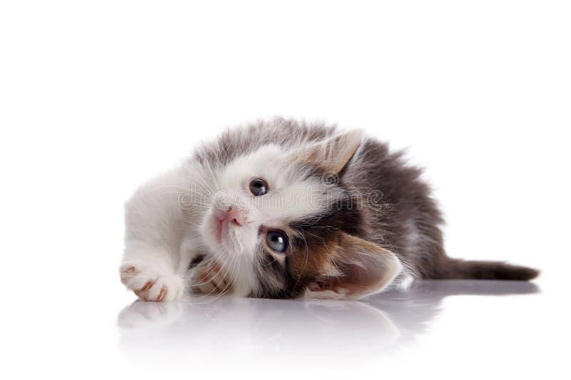 As mentiras manchados bonitas do gatinho imagens de stock