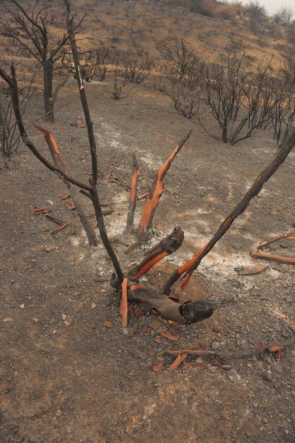 As molas ateiam fogo ao vermelho fotografia de stock royalty free