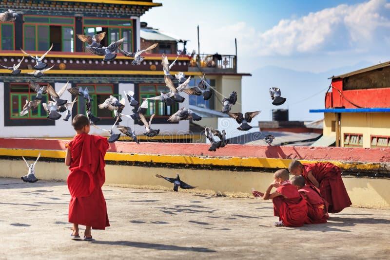 As monges budistas pequenas alimentam pombos em um telhado imagem de stock royalty free