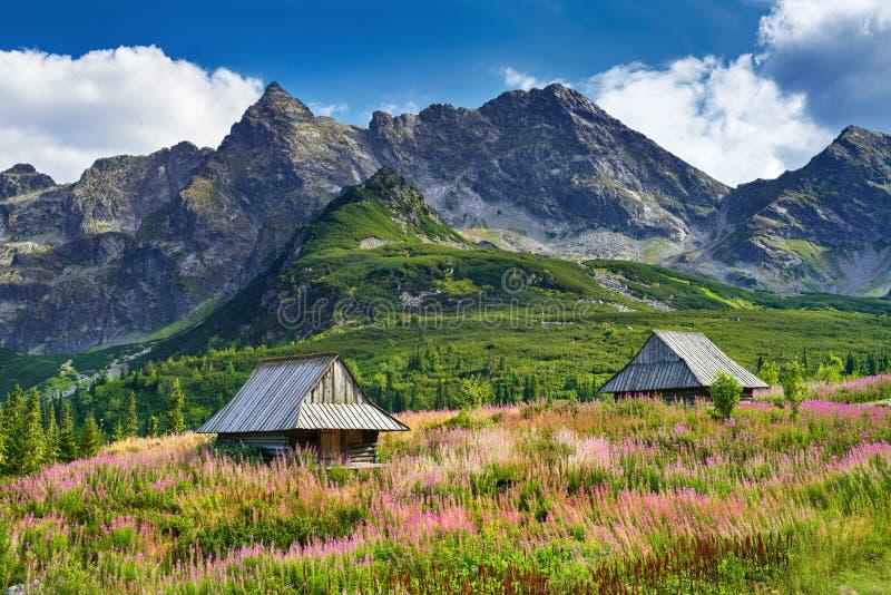 As montanhas ajardinam o verão do Polônia de Carpathians do céu azul da natureza imagem de stock