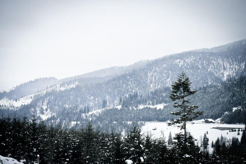 ` As montanhas brancas Romênia do ` ideal fotografia de stock