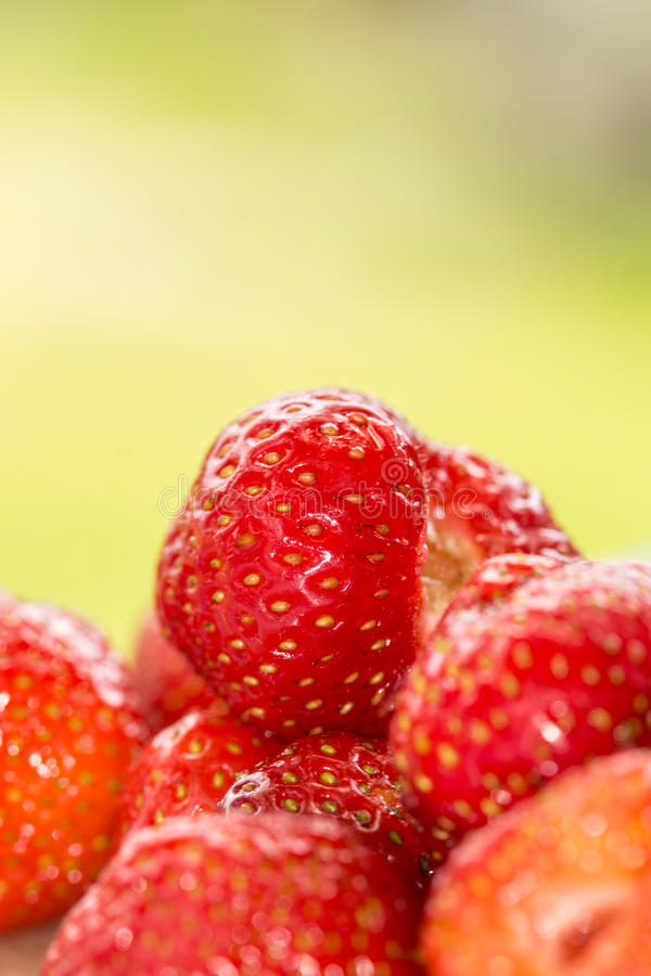 As morangos vermelhas frescas macro do close up com verde borraram o fundo fotografia de stock