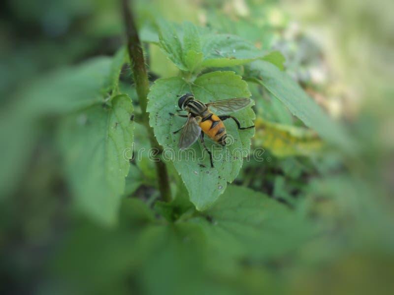 As moscas colam para esverdear as folhas imagem de stock royalty free