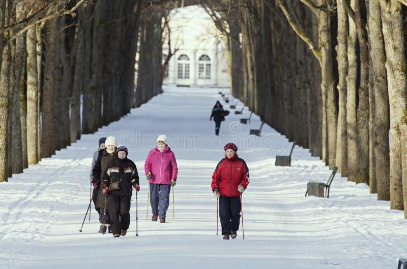As mulheres idosas são contratadas no nordic que anda no parque do inverno imagem de stock royalty free