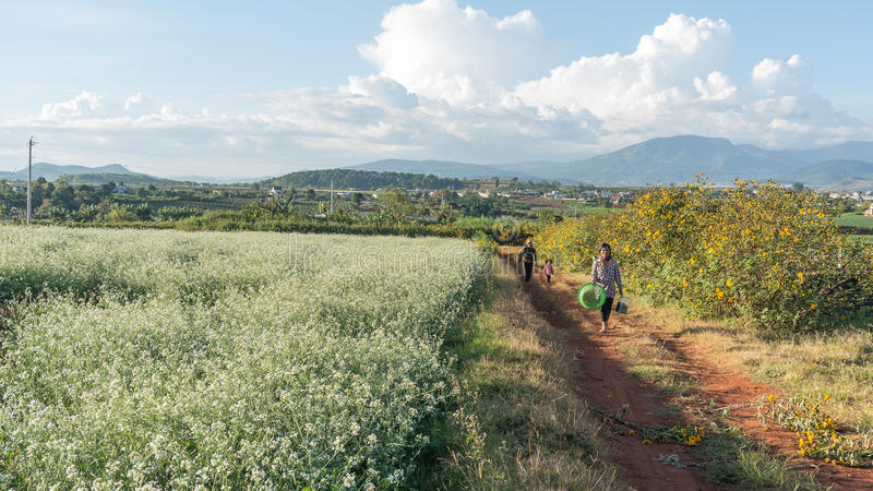 as mulheres vão na maneira dentro do campo da mostarda com a flor branca em DonDuong - Dalat- Vietname imagem de stock royalty free