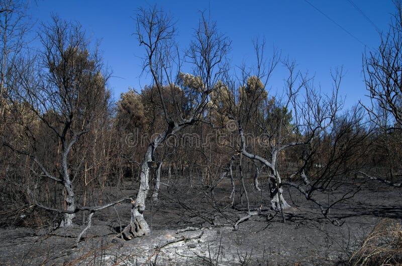 As oliveiras queimaram-se à terra em um incêndio florestal - Pedrogao grandioso fotos de stock