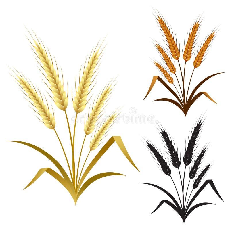 As orelhas do centeio ou da cevada do trigo decoram o grupo de elemento ilustração do vetor