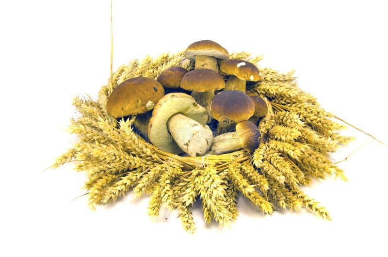 As orelhas do trigo coroam a grinalda e o boleto fresco do cepa-de-bordéus dos mushroms foto de stock