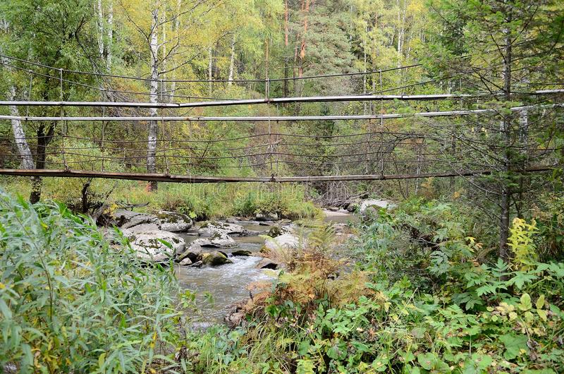 As origens do rio de Belokurikha nas montanhas de Altai fotografia de stock royalty free