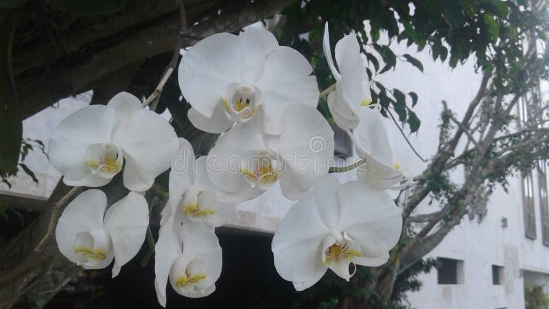 As orquídeas brancas florescem a paisagem do jardim da natureza das plantas imagens de stock royalty free
