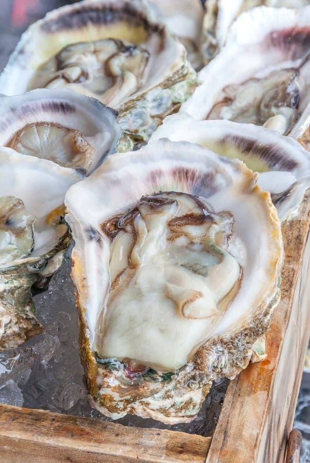 As ostras frescas cruas abertas serviram na bandeja de madeira com gelo imagens de stock