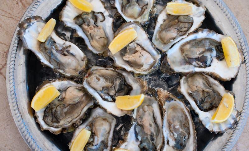 As ostras frescas encontram-se em uma bandeja de gelo e de limão fotos de stock