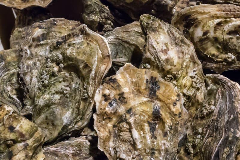 As ostras frescas no mercado de peixes imagem de stock