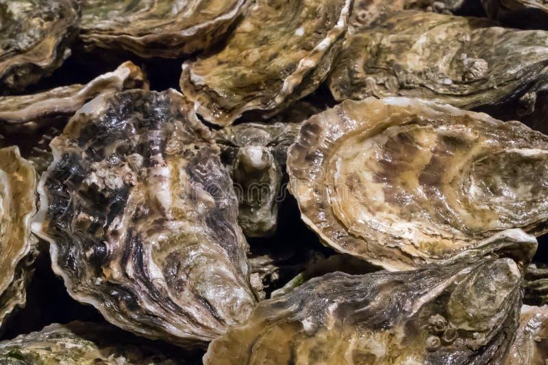 As ostras frescas no mercado de peixes imagens de stock royalty free