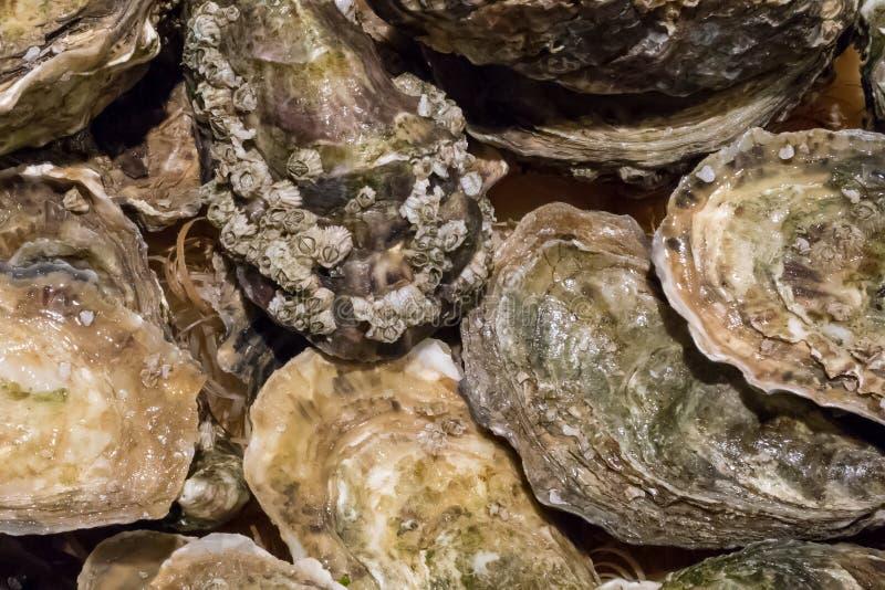 As ostras frescas no mercado de peixes fotografia de stock