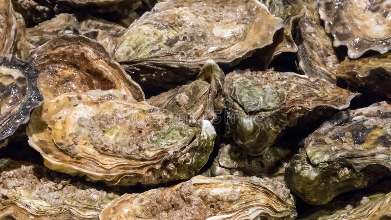 As ostras frescas no mercado de peixes fotos de stock royalty free