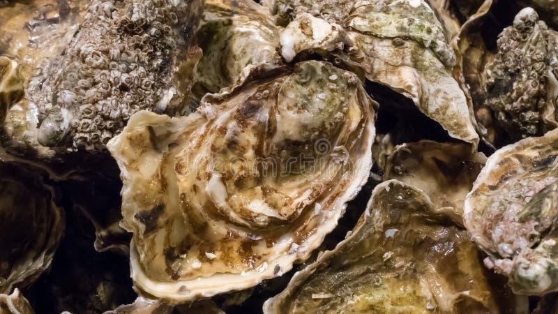 As ostras frescas no mercado de peixes fotos de stock