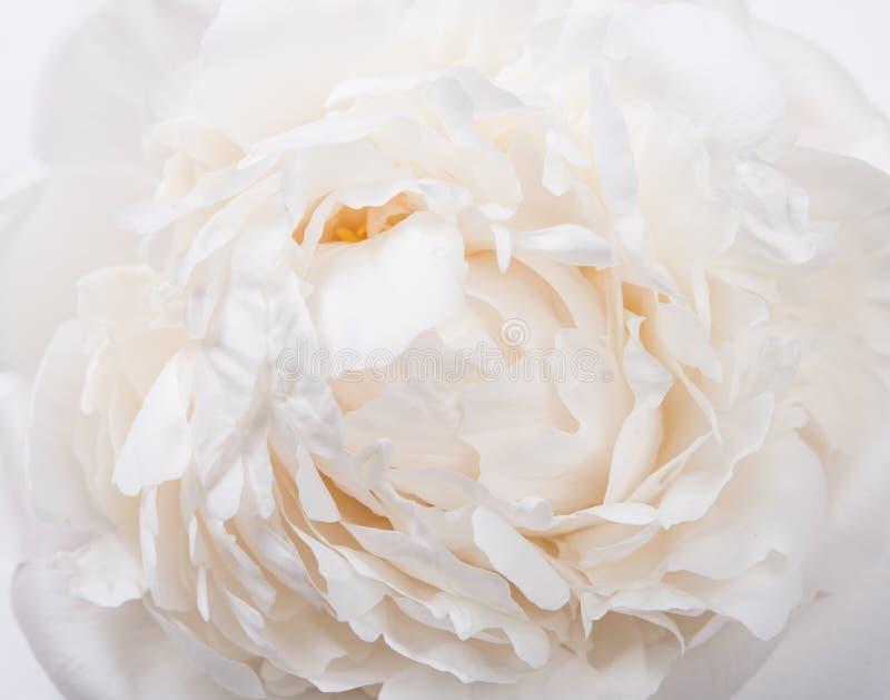 As pétalas brancas close up da peônia, verão florescem o tiro macro T natural foto de stock