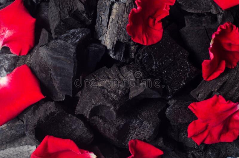 As pétalas cor-de-rosa vermelhas no carvão vegetal preto texture o fundo fotos de stock