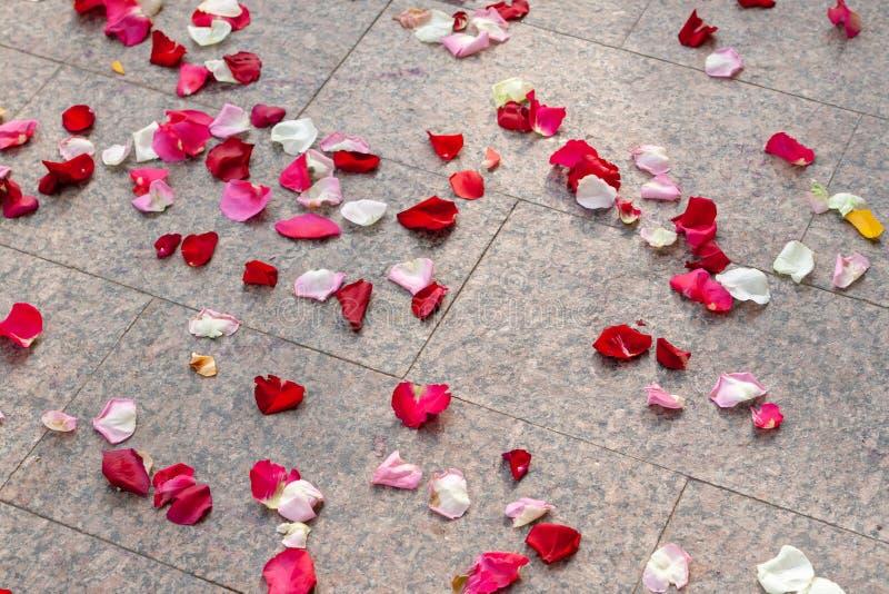 As pétalas de rosa estão espalhadas no chão depois da cerimônia de casamento imagem de stock